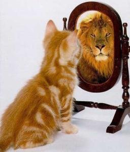 cat-mirror-lion